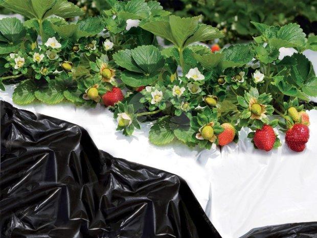 TENAX BLACK & WHITE COVER 1,4x10m - nezāļu kontroles plēve, kas paātrina ražas augšanu