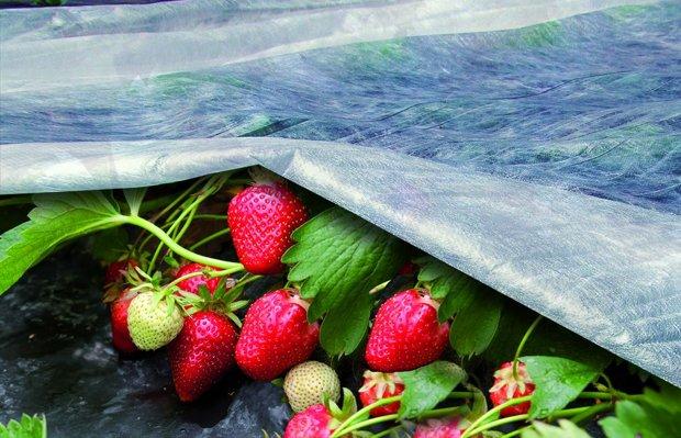 ORTOCLIMA Viegls aizsargpārklājums, kas paātrina ražas augšanu (agroplēve)